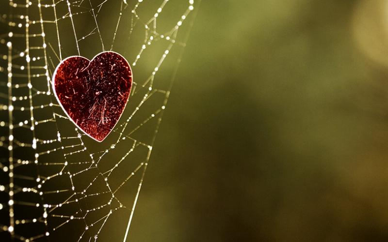 Kalp, Doğa Örümcek Ağı Aşk & Sevgi Kanvas Tablo