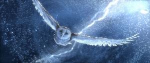 Karda Uçan Baykuş Hayvanlar Kanvas Tablo