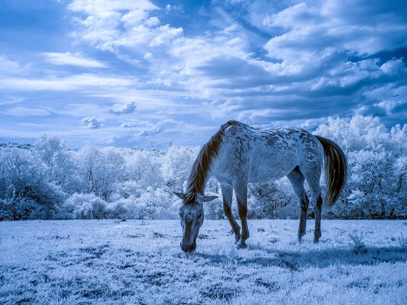 Karlar İçindeki Beyaz At Hayvanlar Kanvas Tablo