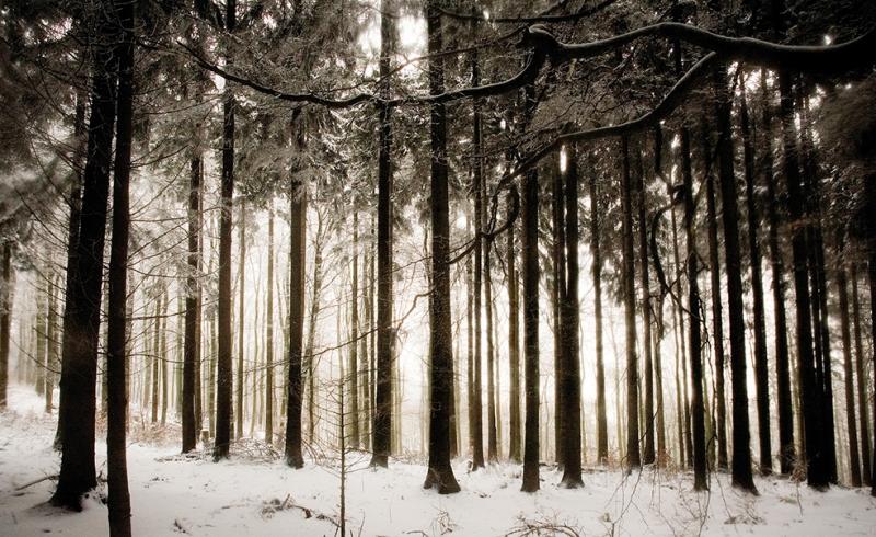 Karlı Orman Doğa Manzaraları Kanvas Tablo