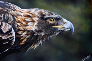 Kartal, Vahşi Kuşlar-1, Hayvanlar, Kuş Temalı Kanvas Tablo