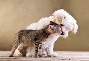 Kedi ve Köpek Dostluğu Hayvanlar Kanvas Tablo