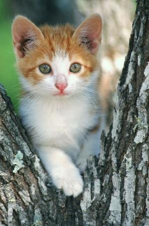 Kediler 1 Kedi Yavrusu Hayvanlar Kanvas Tablo