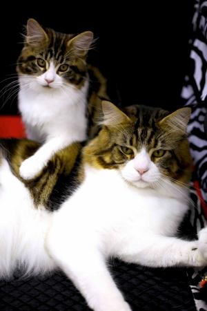 Kediler Hayvanlar Kanvas Tablo