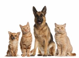 Kediler ve Köpekler Kanvas Tablo