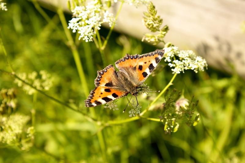 Kelebek 2 Doğa Manzaraları Kanvas Tablo