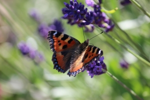 Kelebek 3 Doğa Manzaraları Kanvas Tablo