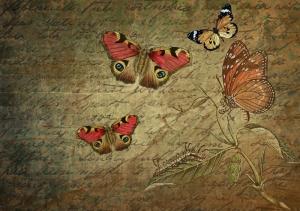 Kelebekler Popüler Kültür Kanvas Tablo