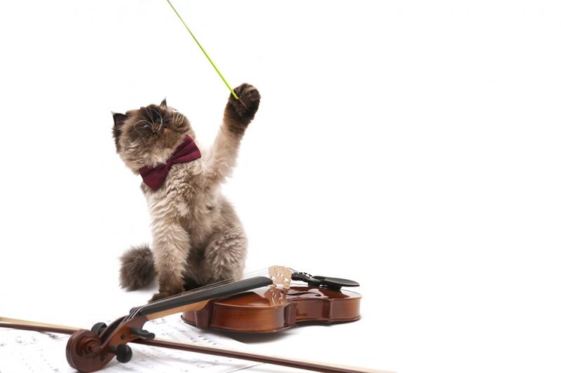Kemancı Kedi Hayvanlar Kanvas Tablo