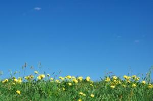 Kır Çiçekleri 1 Doğa Manzaraları Kanvas Tablo