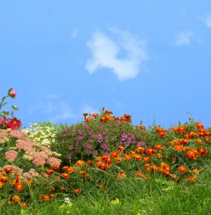 Kır Çiçekleri 2 Doğa Manzaraları Kanvas Tablo