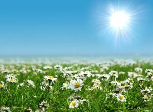 Kır Çiçekleri 3 Papatyalar Doğa Manzaraları Kanvas Tablo