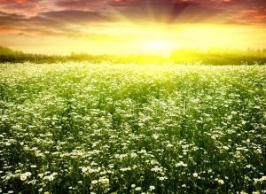 Kır Çiçekleri Doğa Manzarası Kanvas Tablo