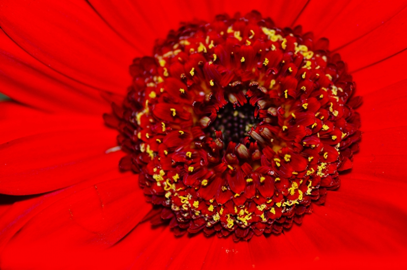 Kırmızı Çiçek Fotoğraf Kanvas Tablo