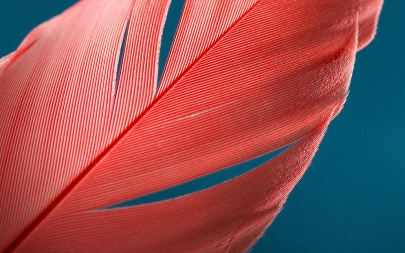Kırmızı Tüy Fotoğraf Kanvas Tablo