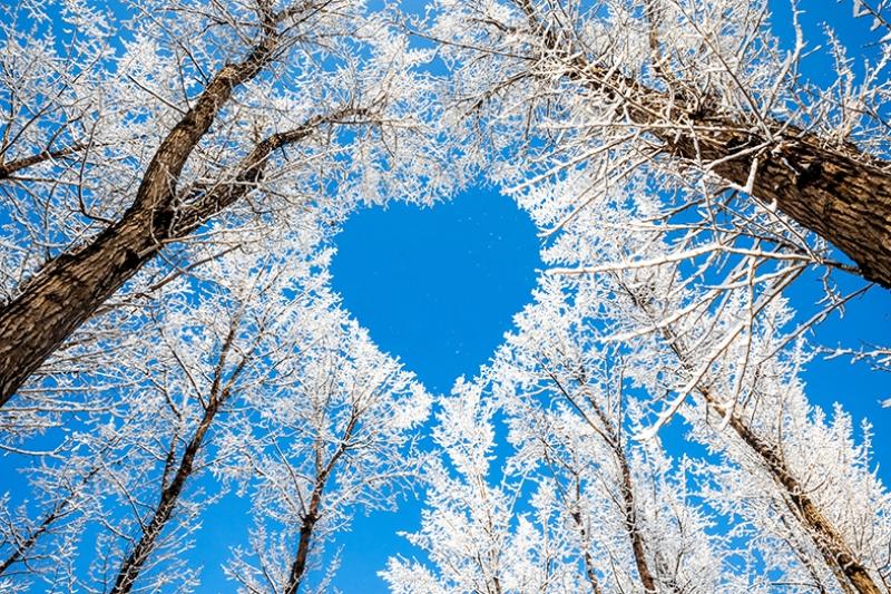 Kış Manzarası ve Kalp Yapmış Dallar Doğa Manzarası Kanvas Tablo