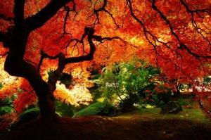 Kızıl Gökyüzü Orman Manzarası Kanvas Tablo