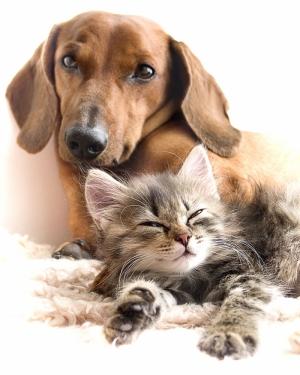 Köpek ve Kedi Yavrusu Hayvanlar Kanvas Tablo