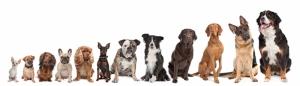Köpekler 2 Hayvanlar Kanvas Tablo