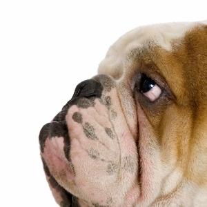 Köpekler 7 Hayvanlar Kanvas Tablo