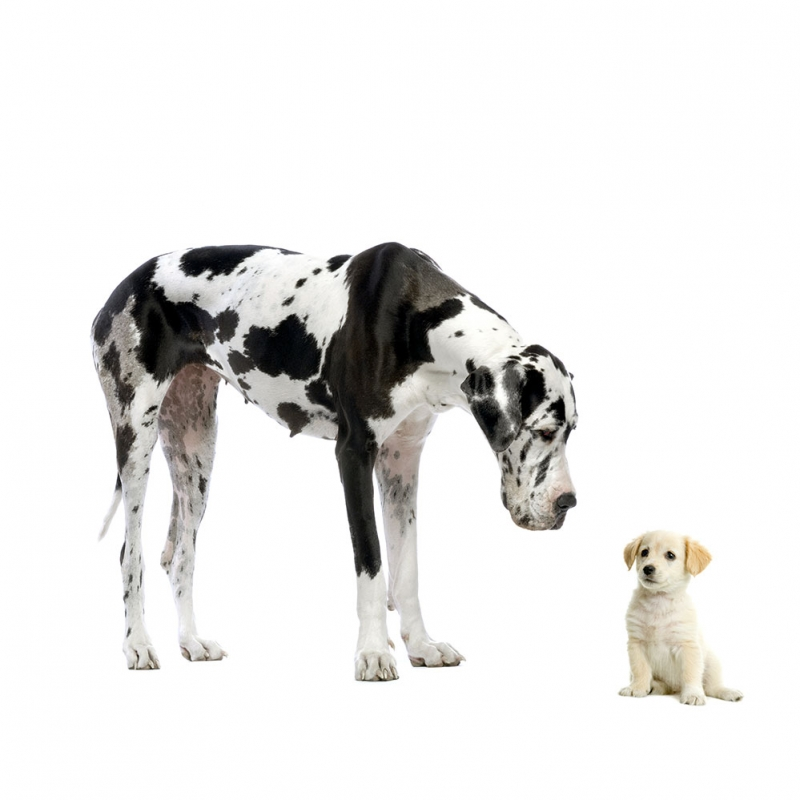 Köpekler 8 Hayvanlar Kanvas Tablo
