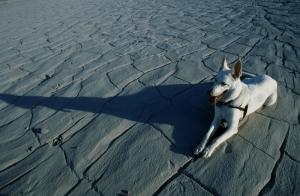 Köpekler 9 Hayvanlar Kanvas Tablo
