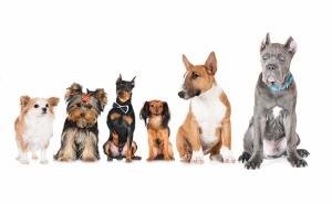 Köpekler Hayvanlar Kanvas Tablo
