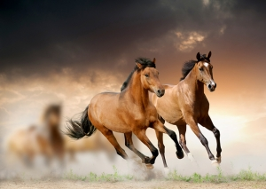 Koşan At Hayvanlar Kanvas Tablo