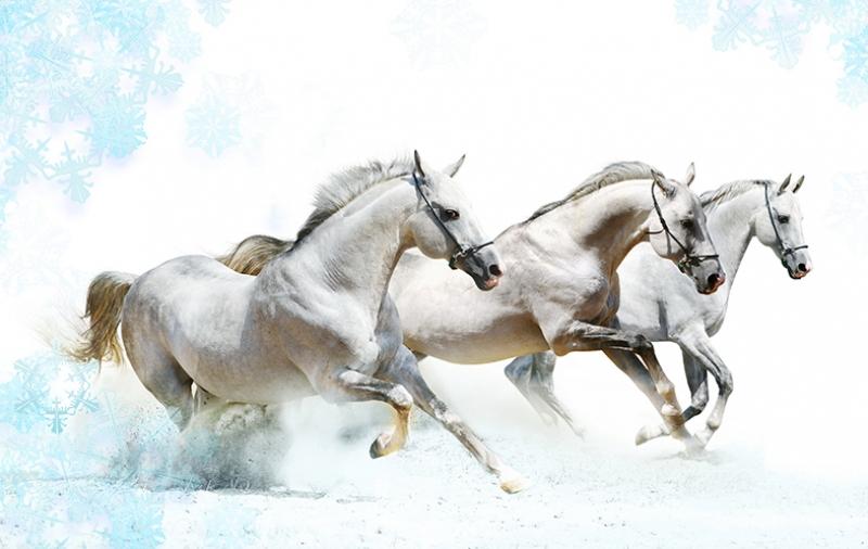 Koşan Beyaz Atlar Hayvanlar Kanvas Tablo