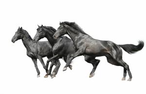 Koşan Gri Atlar Hayvanlar Kanvas Tablo