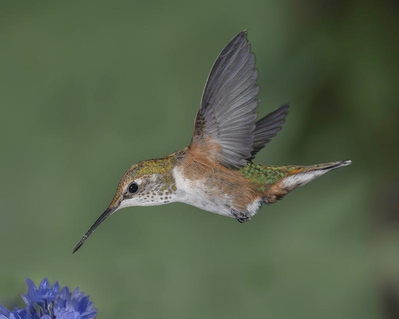 Küçük Sevimli Kuş Kanvas Tablo