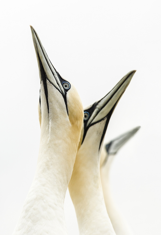 Kuşlar Hayvanlar Kanvas Tablo