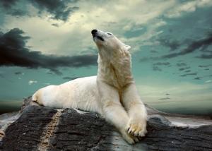 Kutup Ayısı Hayvanlar Kanvas Tablo
