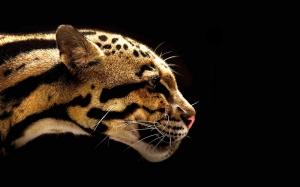Leopar 3 Hayvanlar Kanvas Tablo