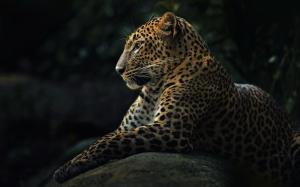 Leopar Hayvanlar Kanvas Tablo