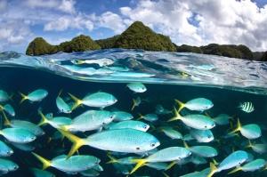 Malakal Adalarında Balık Göçü Hayvanlar Kanvas Tablo