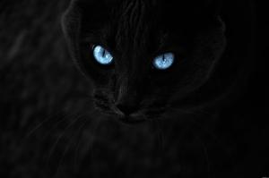 Mavi Gözlü Siyah Kedi Hayvanlar Kanvas Tablo