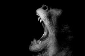Maymun 2 Hayvanlar Kanvas Tablo