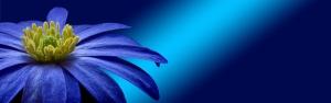 Mor Çiçek Doğa Manzaraları Kanvas Tablo