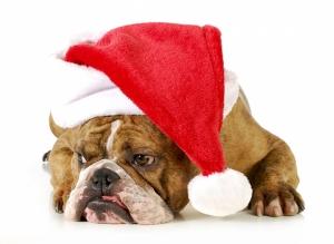 Noel Baba Bulldog Köpek Hayvanlar Kanvas Tablo