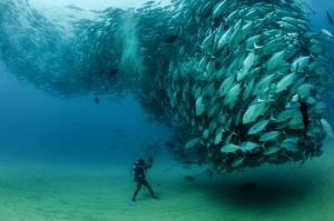 Okyanus Balık Sürüsü Doğa Manzaraları Kanvas Tablo