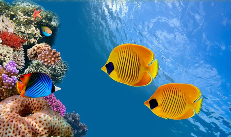 Okyanus Balıkları 2 Doğa Manzaraları Kanvas Tablo