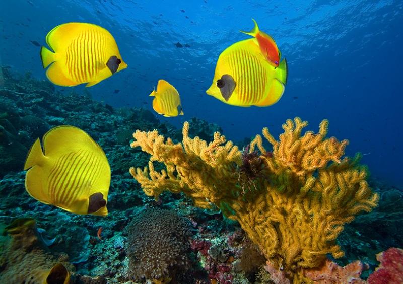 Okyanus Balıkları 3 Doğa Manzaraları Kanvas Tablo