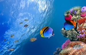Okyanus Balıkları Doğa Manzaraları Kanvas Tablo