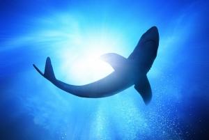 Okyanus ve Köpekbalığı Doğa Manzaraları Kanvas Tablo
