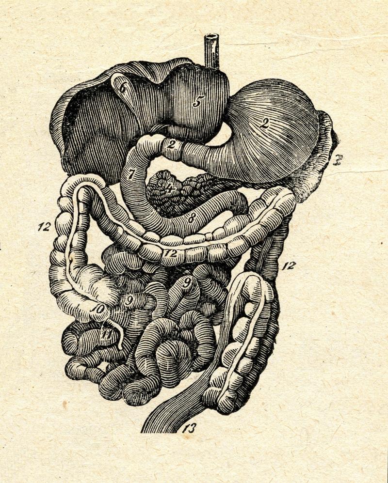 Organlar Retro Çizim Popüler Kültür Kanvas Tablo