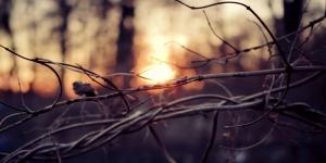Orman 1 Gün Batımı Kuru Ağaçlar HD Doğa Manzaraları Kanvas Tablo
