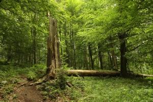 Orman 2 Doğa Manzaraları Kanvas Tablo