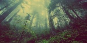 Orman 2 Sisli Hava HD Doğa Manzaraları Kanvas Tablo