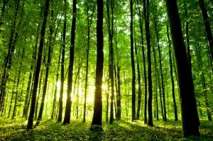Orman Doğa Manzaraları Kanvas Tablo